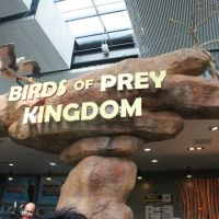 Birds of Prey Kingdom at the Manila Ocean Park